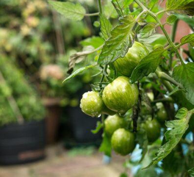 Urban Gardening Vorteile